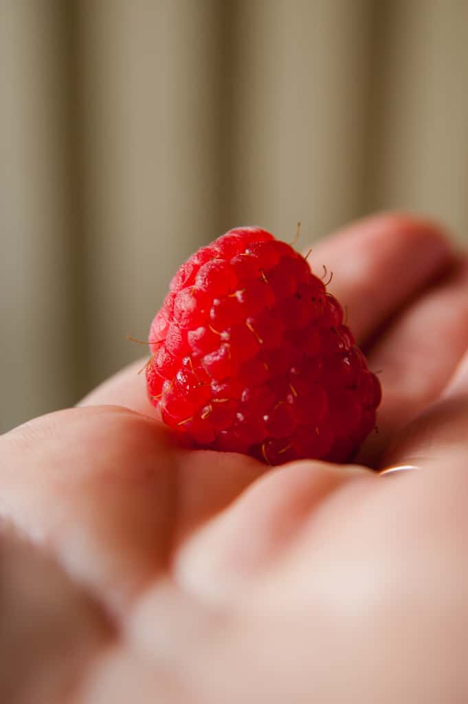 a hand holding a bright red fresh looking raspberry
